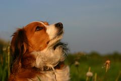 fajny pies portret Obrazy Royalty Free