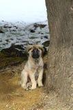 fajny pies szczeniak Zdjęcia Stock
