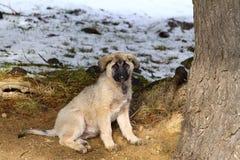 fajny pies szczeniak Zdjęcia Royalty Free