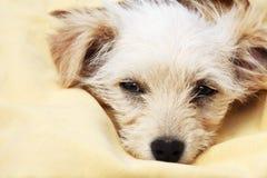 fajny pies szczeniak Obraz Royalty Free