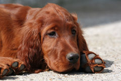 fajny pies szczeniak Zdjęcie Stock