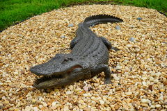 Fake Alligator Royalty Free Stock Images