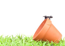 Fake Ant on Pot in the Grass Royalty Free Stock Image