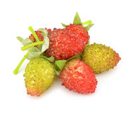 Fake berries. Royalty Free Stock Photography