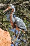 Fake bird Royalty Free Stock Images