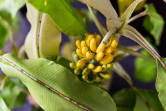 Fake cluster of banana and leaf Stock Photo