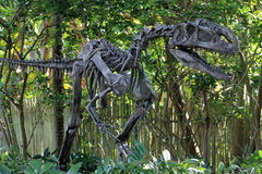 Fake dino skeleton Stock Images