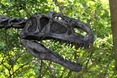 Fake dino skull Royalty Free Stock Photos