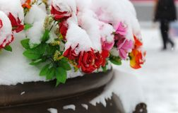 Fake flowers under the snow. Beijing, China. Stock Image