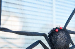 Fake Halloween black spider decoration on window Royalty Free Stock Image