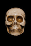 Skull. Fake human skull made of stone isolated on a black background royalty free stock image