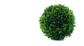 Fake isolated single green bush Royalty Free Stock Photos