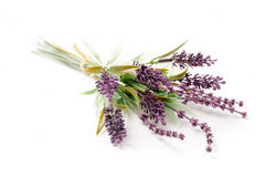 Fake Lavender Royalty Free Stock Images