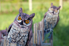 Fake owls Royalty Free Stock Images