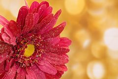 Fake pink flower with gold background Royalty Free Stock Photo