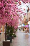 Fake pink sakura flowers Stock Photo