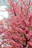 Fake pink sakura flowers Royalty Free Stock Photos
