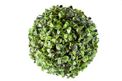 Fake plant cirlce Stock Images