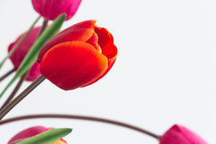 Fake plastic flowers with copyspace in red and orange with purple tulips in the background faded out. Romantic silk valentines d. Ay gift stock photography