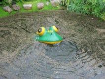 Fake plastic frog Stock Photo