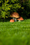 Fake plastic mushroom. S under a bush stock photography