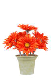 Fake pot of gerbera daisy flowers Stock Photo