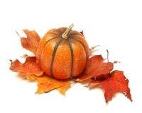 Fake Pumpkin Royalty Free Stock Photo