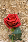 Fake red rose with leaves. Against tree bark Stock Photo