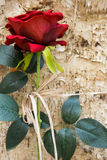 Fake red rose with leaves. Against tree bark Stock Image