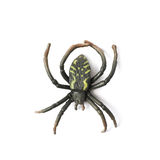 Fake rubber spider toy isolated Stock Photography