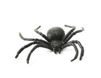Fake rubber spider toy isolated Royalty Free Stock Image
