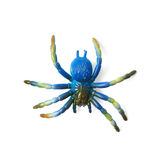Fake rubber spider toy isolated Royalty Free Stock Photos