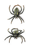 Fake rubber spider toy isolated Stock Image