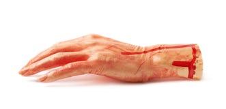 Fake severed hand isolated stock image