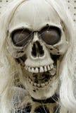 Fake skull Stock Photography