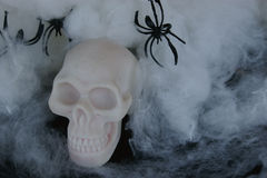 Fake skull with fake spider webs around it Royalty Free Stock Image