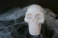 Fake skull with fake spider webs around it Royalty Free Stock Images