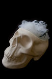Fake skull with spider webs in its head Royalty Free Stock Images