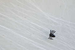 Fake small Halloween black spider on web Stock Photography