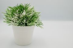 Fake small plants in plastic pot concept on the white background isolated. Beautiful fake small plants in plastic pot concept on the white background isolated stock photos