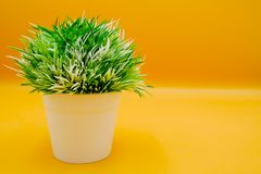 Fake small plants in plastic pot concept on the yellow background isolated. Beautiful Fake small plants in plastic pot concept on the yellow background isolated royalty free stock images