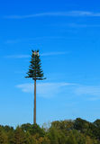 Fake Tree-Cell Tower in NC Stock Photo