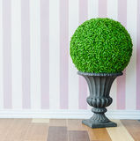 Fake tree. Fake little tree in the vase Stock Images