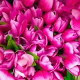 Fake tulip bunch Royalty Free Stock Photos