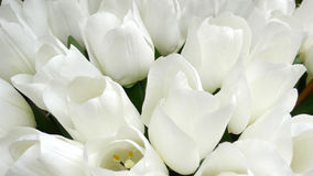 Fake white tulips Stock Photo