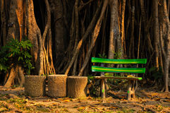 Fake wood bench with Rubber Plant in background Stock Image
