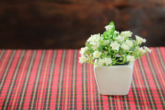 Faker flower Royalty Free Stock Photo
