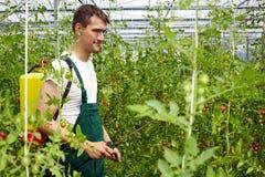 faktorskiej uprawy organicznie ochrona Obrazy Stock