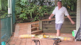 Faktotum Cutting Bamboo 1 arkivfilmer