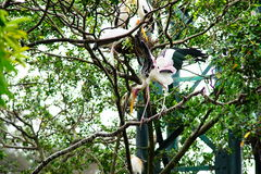 fakturerad storkyellow Royaltyfria Bilder